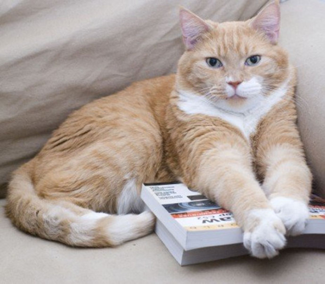 Mario the cat resting on the couch with his paws on a pile of books